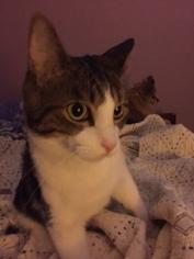 Sultry Mr Kitten